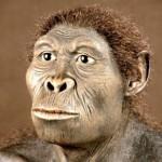 homo-sapiens-habilis_op_800x776-300x291